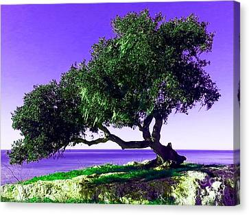 Tree Of Life - 2 Canvas Print by Tap On Photo