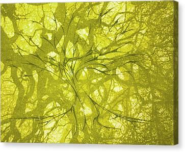 Canvas Print featuring the mixed media Tree Of Life by Rachel Hames