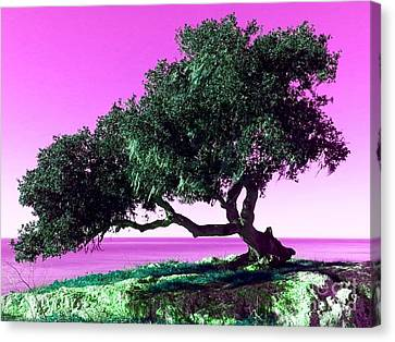 Tree Of Life - 1 Canvas Print by Tap On Photo