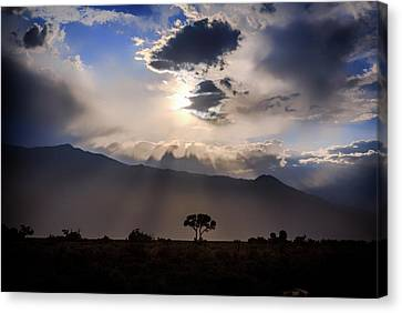 Canvas Print featuring the photograph Tree Of Light by Cat Connor