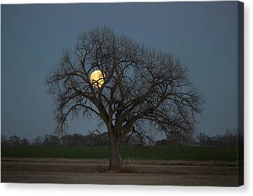 Tree Of Supermoon Canvas Print