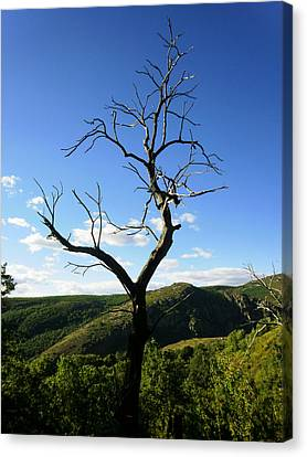 Tree Canvas Print by Oliver Johnston