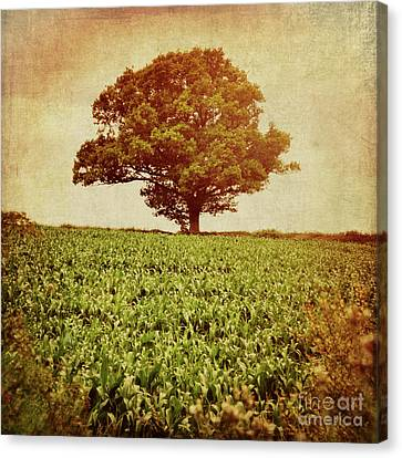 Canvas Print featuring the photograph Tree On Edge Of Field by Lyn Randle