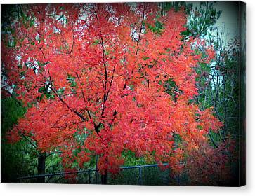Canvas Print featuring the photograph Tree On Fire by AJ Schibig