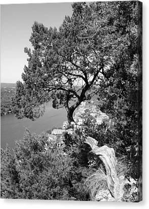 Tree On Mount Bonnell Canvas Print by Lindsey Orlando