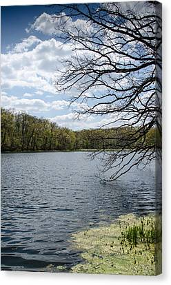Tree Over Water Canvas Print by Amy Turner