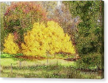 Tree Park Aglow Canvas Print by Elaine Teague
