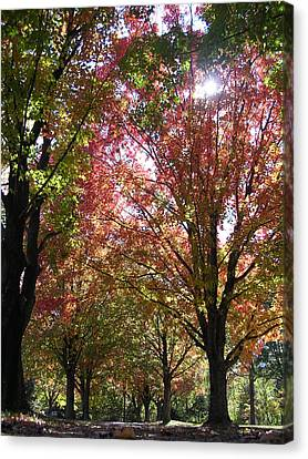 Tree Pathway Canvas Print by Audrey Venute