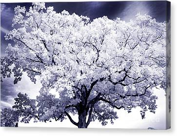 Canvas Print featuring the photograph Tree by Paul W Faust - Impressions of Light