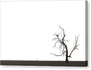Tree Canvas Print by Peter Tellone
