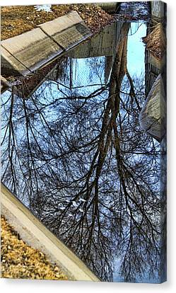 Tree Reflection From No Where Photography Image Canvas Print by James BO  Insogna