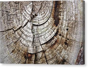 Tree Rings - Photography Canvas Print by Ann Powell