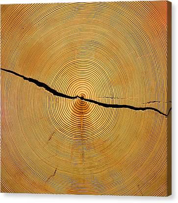 Tree Rings Canvas Print by Steven Ralser