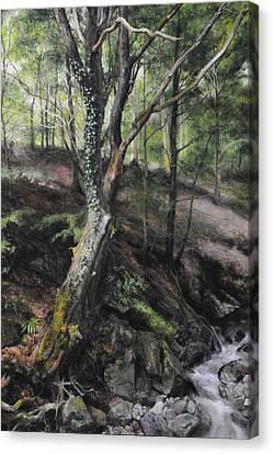 Tree River Wood Canvas Print