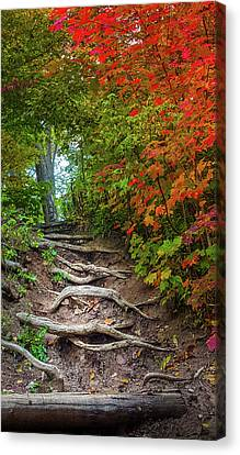 Tree Roots On A Trail Canvas Print