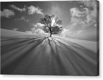 Tree Shadow Canvas Print by Kengo Shibutani
