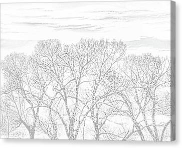 Canvas Print featuring the photograph Tree Silhouette Gray by Jennie Marie Schell