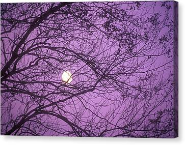 Tree Silhouettes With Rising Moon In Cades Cove, Great Smoky Mountains National Park, Tennessee, Usa Canvas Print by Altrendo Nature