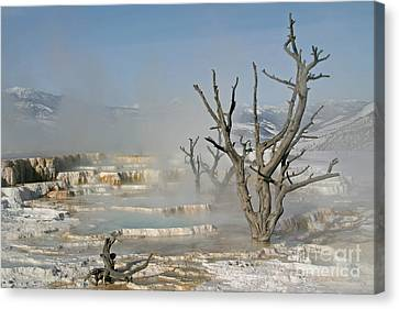 Tree Skeletons In The Mist Canvas Print