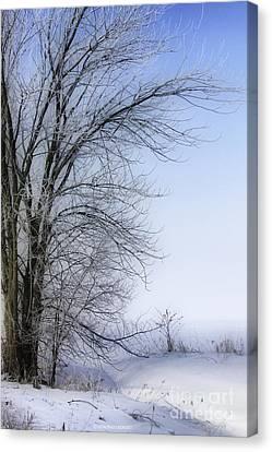 Tree-snow-fog Canvas Print by Deborah Benoit