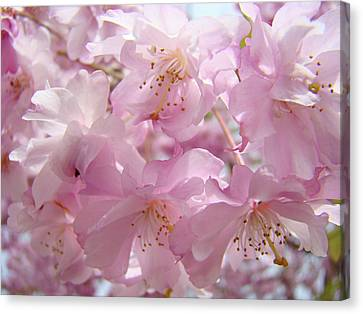 Tree Spring Pink Flower Blossoms Art Print Baslee Troutman Canvas Print by Baslee Troutman