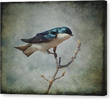 Tree Swallow Canvas Print by Al  Mueller