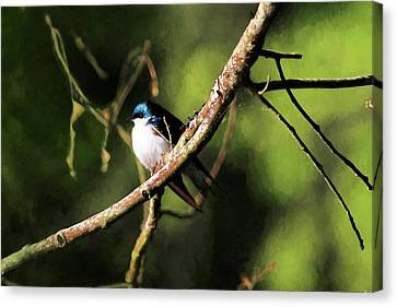 Tree Swallow Painting Canvas Print by Carol R Montoya