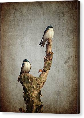 Tree Swallows Canvas Print by Al  Mueller