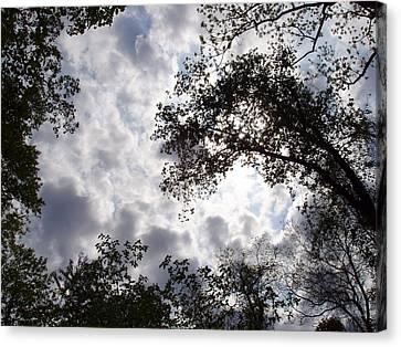 Tree Swirl Canvas Print by Deborah  Crew-Johnson