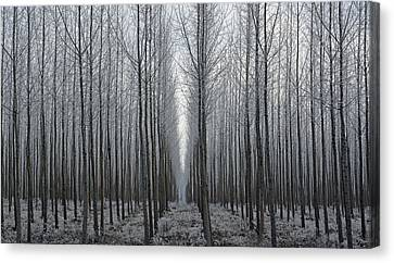 Tree Symmetry Canvas Print