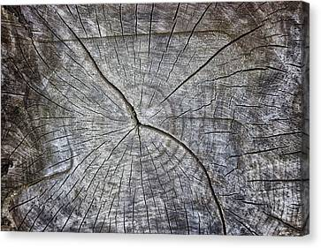 Bark Design Canvas Print - Tree Textures by Martin Newman