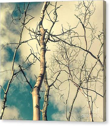 Bough Canvas Print - Tree Top 2 by Priska Wettstein