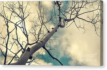 Bough Canvas Print - Tree Tops 1 by Priska Wettstein