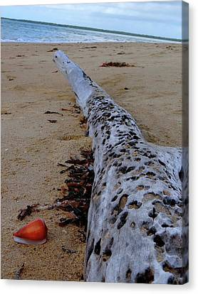 Tree Trunk And Shell On The Beach Full Size Canvas Print by Exploramum Exploramum