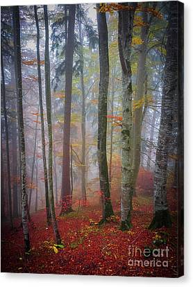 Tree Trunks In Fog Canvas Print by Elena Elisseeva