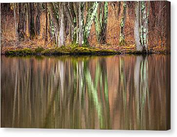 Tree Trunks Reflecting Canvas Print