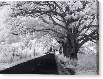 White Chevy Canvas Print - Waialua White-out by Sean Davey