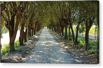 Tree Tunnel Canvas Print by Valentino Visentini