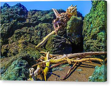 Sonoma Coast Canvas Print - Tree Turns Among The Rocks by Garry Gay
