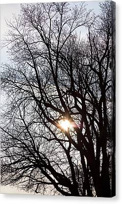 Canvas Print featuring the photograph Tree With A Heart by James BO Insogna