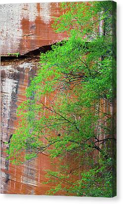 Oak Creek Canvas Print - Tree With Red Canyon Wall by Joseph Smith