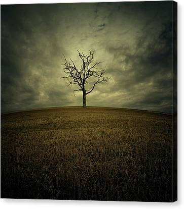 Tree Canvas Print by Zoltan Toth
