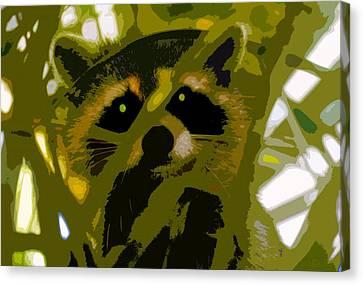 Treed Raccoon Canvas Print by David Lee Thompson