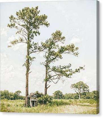 Abandoned Farm House Canvas Print - Treehugger by Humboldt Street