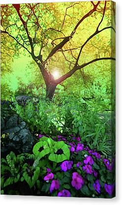 Treelight Canvas Print by Tara Turner