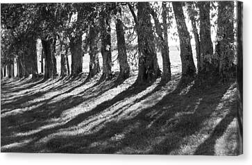 Treeline Canvas Print by Amy Tyler