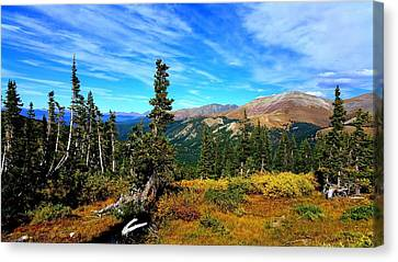 Canvas Print featuring the photograph Treeline by Karen Shackles