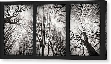 Treeology Canvas Print by Dorit Fuhg
