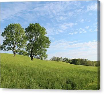 Summer Trees 3 Canvas Print