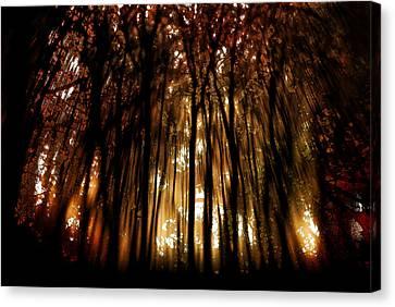 Trees 2 Canvas Print by Tony Wood